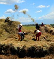 3rd Prize: Farmers' Palay Thresher by Carlos Ng