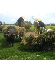 iConsolation Prize: Field Work by Sarah May Garcia