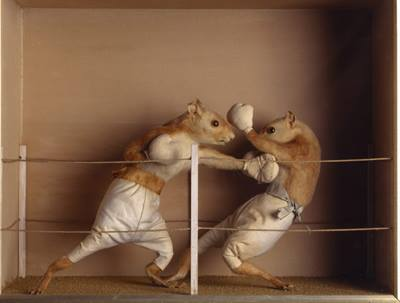20140511-hamster-fighting