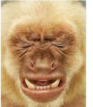 20140516-crap-day-monkey