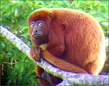 20140519-nervous-monkey