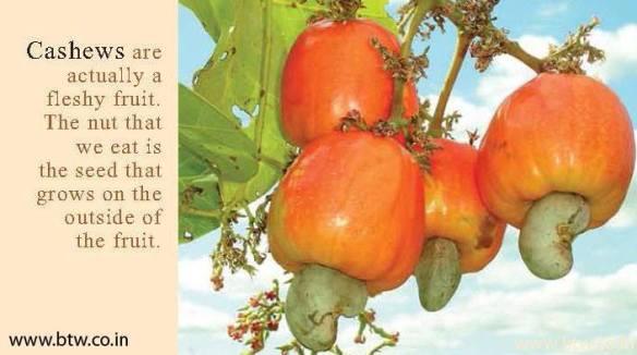 20140721-cashews