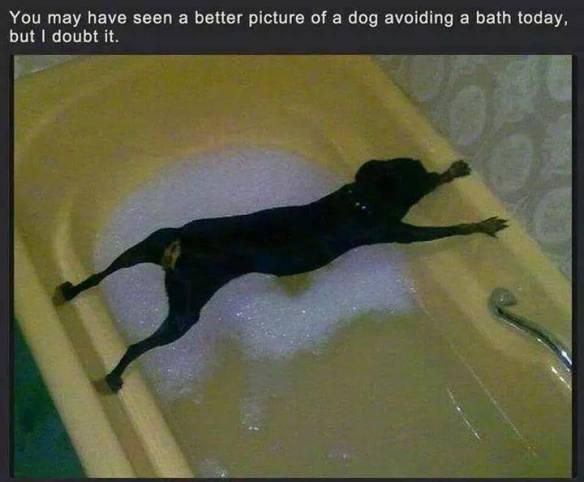 20140827-dog-bath