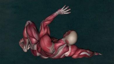 Muscular Distrophy2