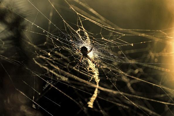 Un ragno e i figli sono rimasti imprigionati nell'ambra 99 milioni di anni fa: la resina ha reso eterno il rapporto della madre con la prole