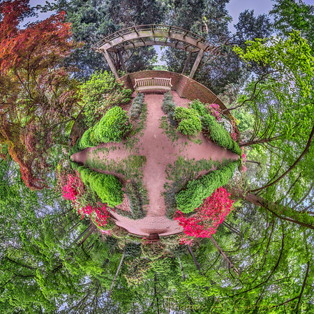 A spherical panorama, presented as a stereographic projection, little planet photo. This was taken at the Azalea Grove at the National Arboretum in Washington, DC.