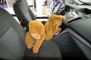 Allianz, ATZ, Crawltest, Hunde in Auto richtig transportieren.