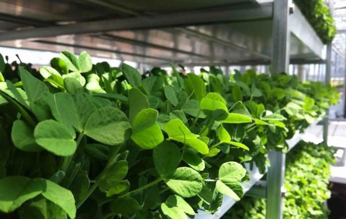TAG Level - Mini Greenhouse