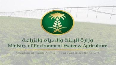 "Photo of ""البيئة"" ترفع حظر استيراد المواشي الحية من إسبانيا وألبانيا"