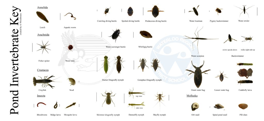 Oee Worksheet and Unit 1 Diversity Of Living Things Mrs Deacon