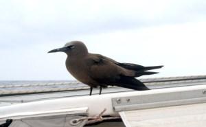 Hitchhiking bird