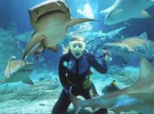 Shark feeding : personne n'en fait, mais il y en a toujours