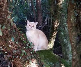 Kitten in a Tree, staring Kitten George