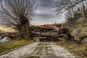 Overcoming Obstacles to Novel Writing: What's Stopping you?