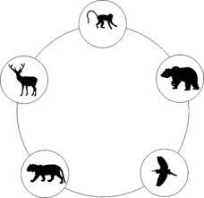 zabawy pięciu zwierząt