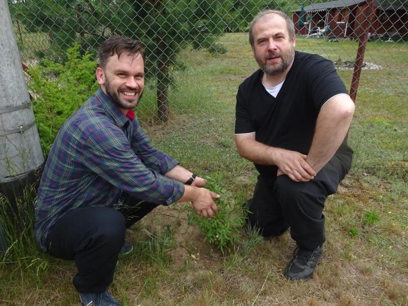 my dwaj z mandżurską wierzbą - to zielone pomiędzy...