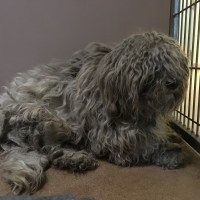 Doggie Makeover - Terrified Matted Dog Gets Groomed