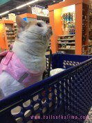 Kali-Ma the at shopping