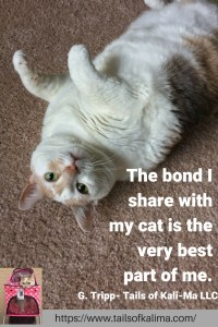 5 Tips To Bond With Your Cat