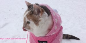Kali-Ma Licking The Snow