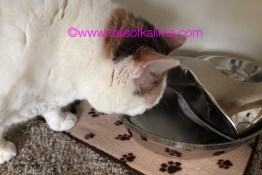 4 Reasons Your Cat Needs A Water Fountain