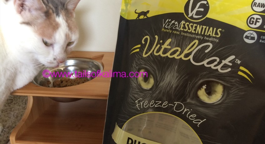 5 Reasons to Feed Your Cat Dyhydrated Cat Food