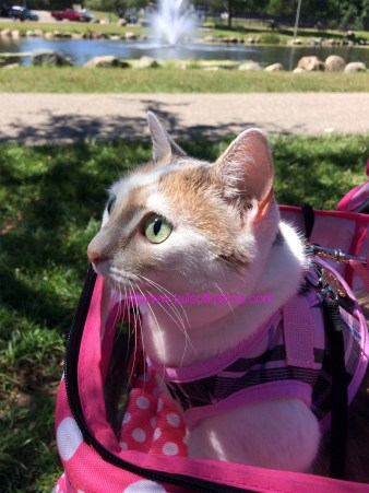 6 Tips For Enjoying Summertime With Your Cat