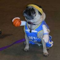 19_20dog_20basketball_20player