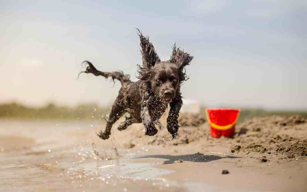 Surviving the first year of your puppy