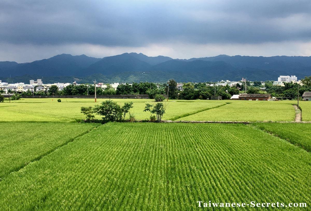miaoli rice field taiwan