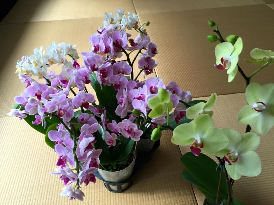 建國花市買的美麗蘭花 (攝影: 陳嫦芬)