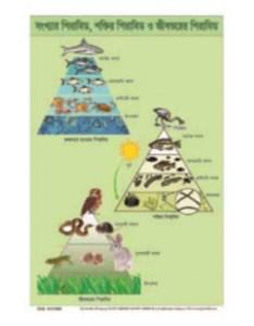Ecological pyramid chartg also chart rh tajbd