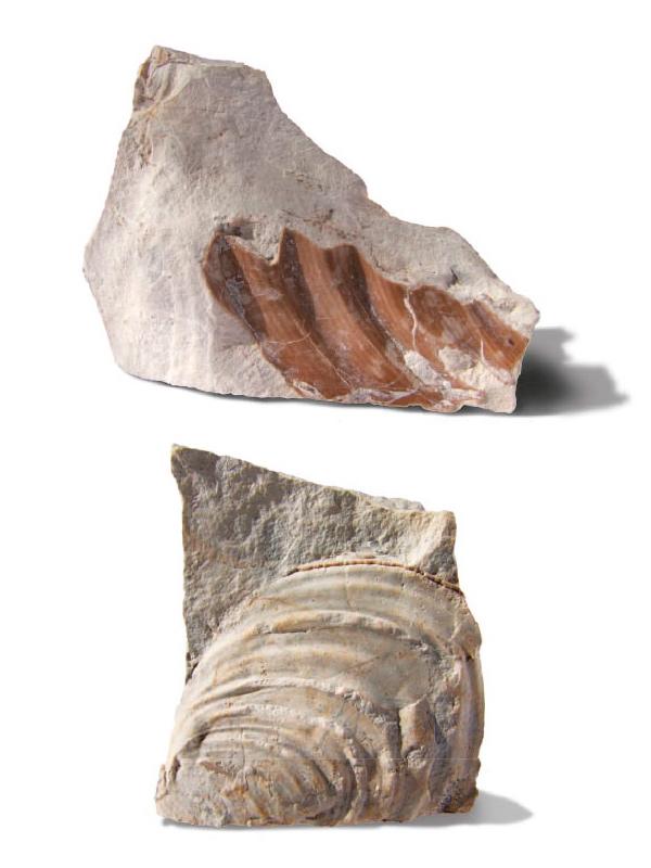 Zkameněliny křídového moře (Úpohlavy)