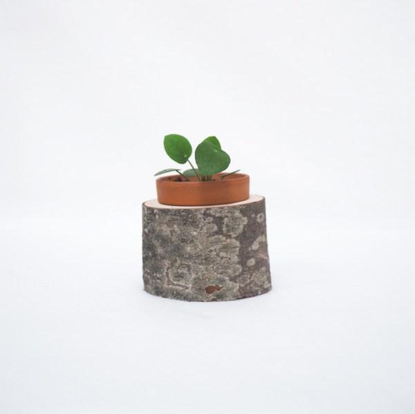 Plantenbakje boomstam