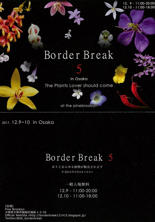 border break 5ポスター
