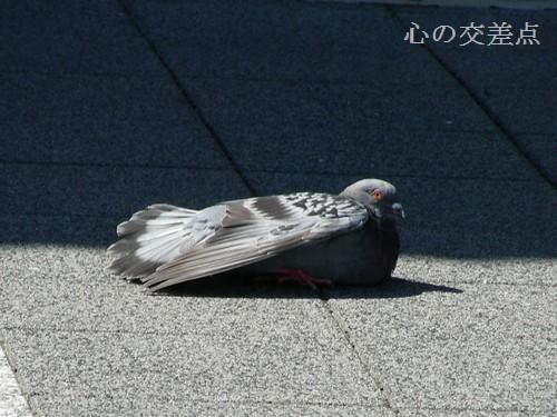 飛べない鳥