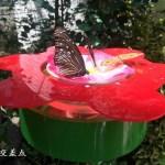 蝶々のように