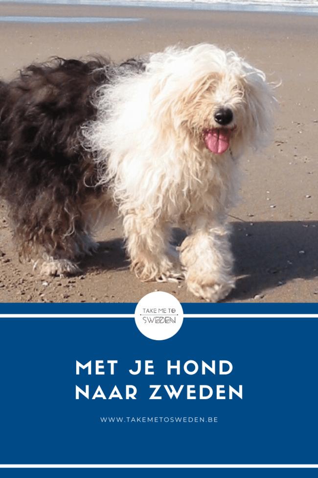 Met je hond naar Zweden op vakantie
