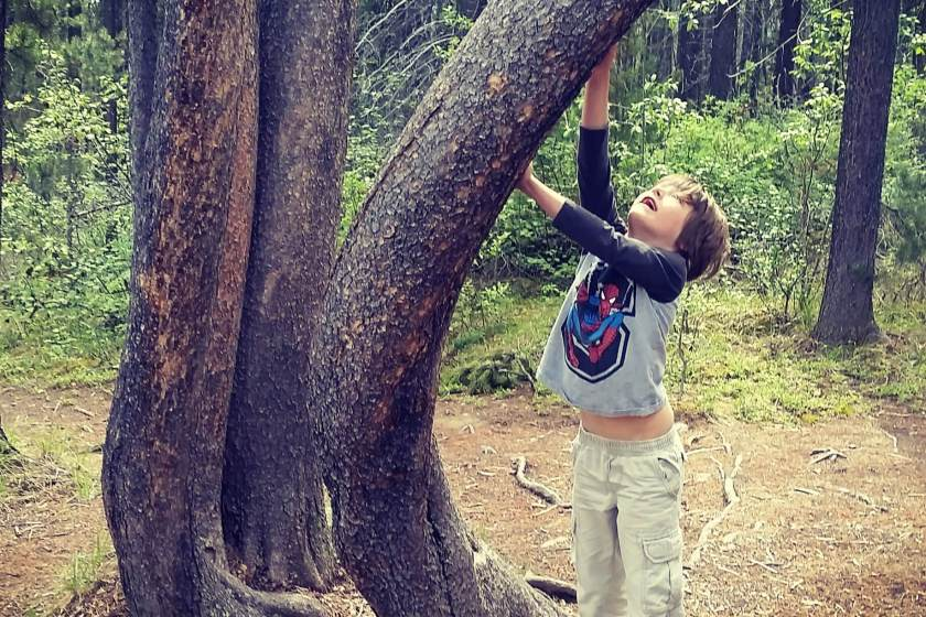 Boy reaching up the trunk of a curved tree in a wooded area