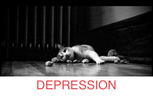 depressed-cat_300x200_STRIPE