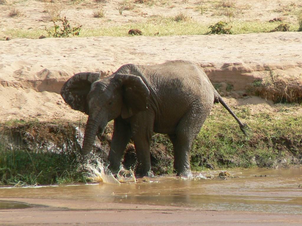 Safaris met bestemming Samburu Game Reserve