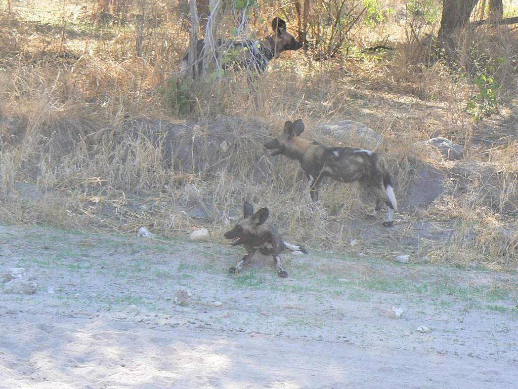 Safaris met bestemming Southern Cirquit