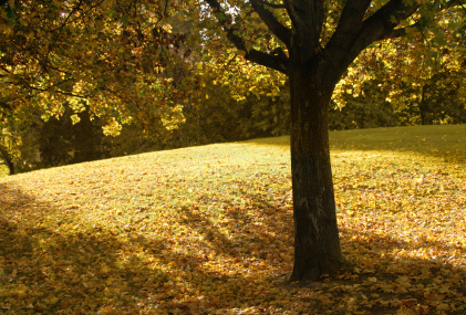 Free Wallpaper Fall Scenes How Does Nature Impact Our Wellbeing Taking Charge Of