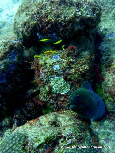 wicked diving review moray eel taking to the open road peggy tee