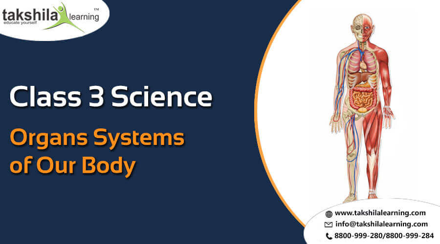 Class 3 Science-Organ Systems of Our Body-CBSE NCERT Solution for Class 3