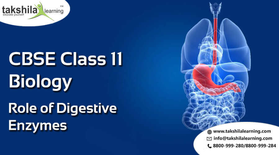 CBSE Biology class 11 online notes & NCERT Solutions 11th science,