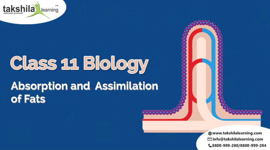 CBSE Solutions for Class 11 Biology ABSORPTION AND ASSIMILATION OF FATS
