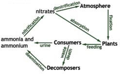 What is Nutrients and Nutrient Cycle? Class 12 Biology