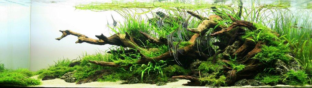 TAKUMI lifestyle   zen-aquarium0