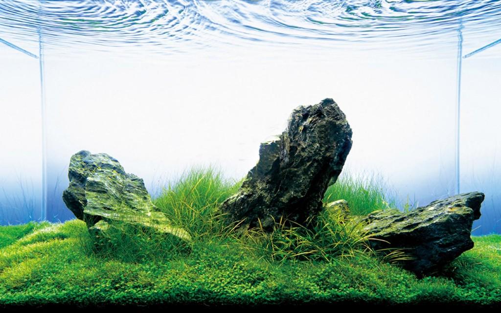 TAKUMI lifestyle   zen-aquarium6